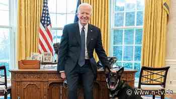 """Nach Beißattacke im Weißen Haus: Bidens Hund """"Major"""" erhält Spezialtraining"""