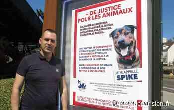 Rozay-en-Brie : les maîtres du chien maltraité Spike finalement condamnés - Le Parisien