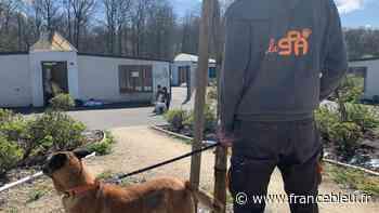 La SPA de Luynes en colère après de nombreux retours d'animaux adoptés - France Bleu