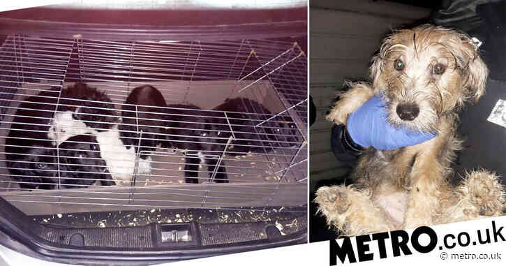 Six puppies die after being stuffed into carrier bags and guinea pig cage