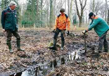 Aufforstung in Rastede: Rund 1200 neue Bäume für den Schlosspark - Nordwest-Zeitung