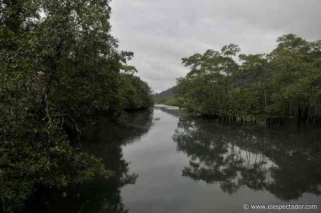 Asesinan a líder comunitario y al inspector de Policía en Nuquí (Chocó) - El Espectador