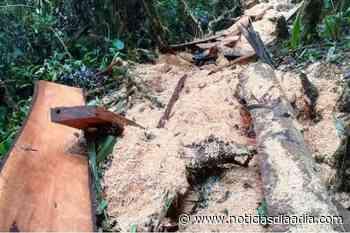 Capturas en Zipaquirá y Cogua por daños ambientales en Cundinamarca - Noticias Día a Día