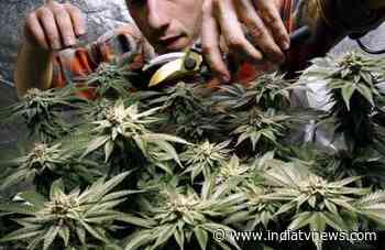 After alcohol, Uber now aims to deliver marijuana at your doorstep - India TV News