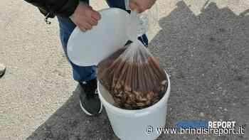 Sequestrate 80 chili di cozze nere sgusciate, provenivano dalla Grecia - BrindisiReport