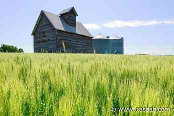 GRAINS-Wheat up for second session on dry weather in Europe, U.S. - Nasdaq