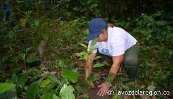 Instituciones se unieron en una jornada de reforestación en El Pital - Huila