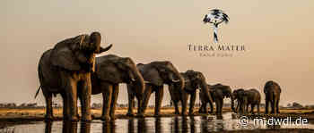 10 Jahre Terra Mater: Mit Leonardo DiCaprio zum Welterfolg - DWDL.de - DWDL.de