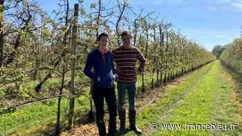 A Craon, une famille de producteurs de pommes et de poires un peu résignée face au gel - France Bleu