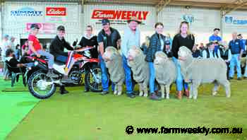 Rangeview and Leween Poll Dorset stud shine at Williams Expo