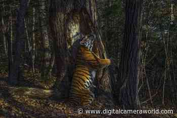 Wildlife Photographer of the Year 2020 exhibition comes to Sydney - Digital Camera World