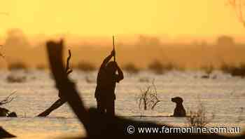 Belated bag limit rise for Victorian duck season