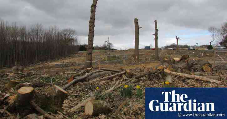 UK's native woodlands reaching crisis point, report warns