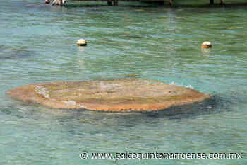 Campaña de protección a los estromatolitos en Bacalar – Palco Noticias - Palco Quintanarroense
