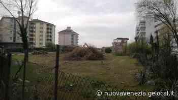 «Strage di alberi a Jesolo, rasa al suolo l'ex colonia Stella Maris» - La Nuova Venezia