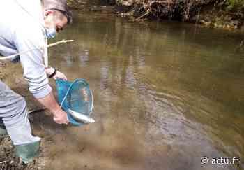 Des cours d'eau empoissonnés dans le pays d'Argentan - actu.fr