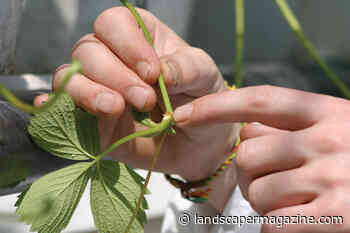 How to relocate plants from house to garden | the Landscaper - The Landscaper