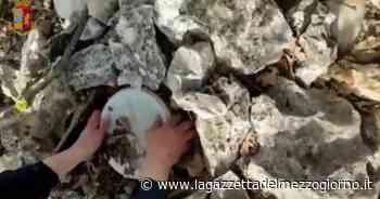 Chili di droga in un terreno incolto: sequestro a Sannicandro di Bari - La Gazzetta del Mezzogiorno