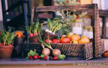 Salute e alimentazione della donna, open day a Siena - gonews