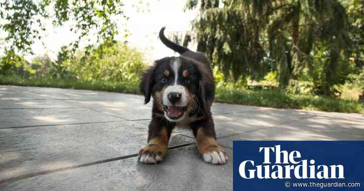 Dog-bite Britain: the problem with the pandemic puppy explosion