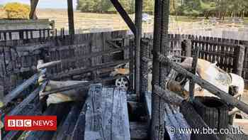 New Forest pony sales yard fire 'shattering' - BBC News