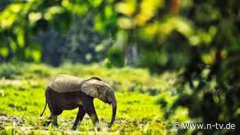 Kaum noch intakte Lebensräume: Nur 2,9 Prozent der Landflächen unberührt
