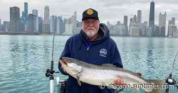 Brown trout and coho are going on southern Lake Michigan, big smallmouth bass are active on the lake and rive… - Chicago Sun-Times