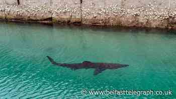 Basking shark spotted off Torquay