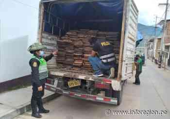 Amazonas: Incautan 2800 pies tablares de la especie Ishpingo en Chachapoyas - INFOREGION