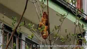 Einsatz für Tierschützer: Gefährliches Tier in Busch entpuppt sich als Croissant
