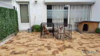 Seine-Saint-Denis. Trois chiens saisis à Villepinte après la diffusion d'une vidéo de maltraitance - actu.fr