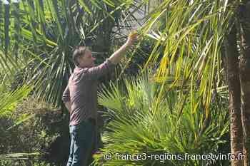 Savenay, près de Nantes : face au réchauffement climatique, Paul le jardinier ne cultive que des plantes exoti - France 3 Régions