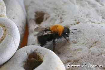 Una persona murió y otras cuatro resultaron heridas tras ataque de abejas en Santander - La FM
