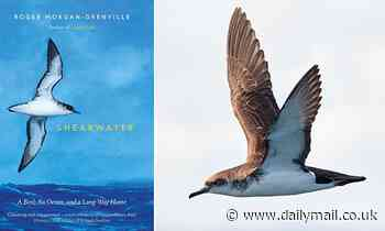 Fascinating account of the lives ofManx shearwaters in a nature book