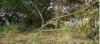 Previas : Suspenden firma de ingenieros por talar 27 árboles en lote de Bochalema - 90 Minutos