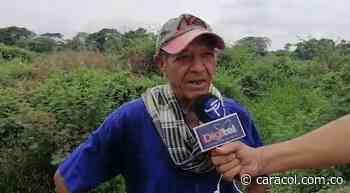 Abejas atacan a trabajadores palmeros, uno murió y 5 más están lesionados - Caracol Radio