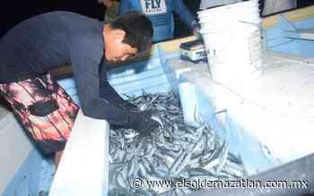 Capturan pescadores hasta una tonelada de 'pajarito' - El Sol de Mazatlán