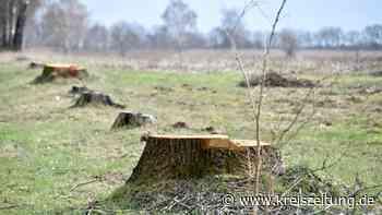 Waren die Baumfällungen für das neue Finteler Baugebiet alternativlos? - kreiszeitung.de