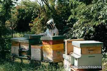 Cernusco sul Naviglio vuole diventare Comune amico delle api - Prima la Martesana