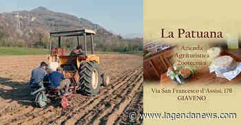 """La Cascina """"La Patuana"""" di Giaveno ha piantato le patate, biologiche e genuine in quattro varietà - http://www.lagendanews.com"""