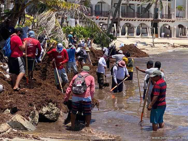 Exigen instalación de barreras antisargazo en Playa del Carmen - La Jornada