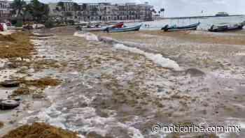 Recale de sargazo afecta sólo a unos arenales en Playa del Carmen - Noticaribe