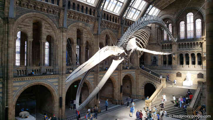 Booking opens for the Natural History Museum