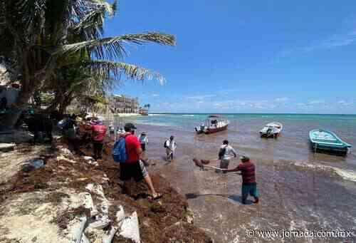 Empresarios exigen poner barreras contra sargazo en Playa del Carmen - La Jornada