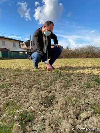 Mogliano Veneto, un nuovo boschetto vicino alle scuole di Campocroce - Notizie Plus - Notizie Plus