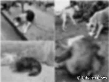 Repudio en Ipiales: a fundación que pide ayuda para animales le envenenaron a 10 perros - TuBarco