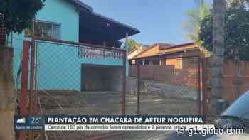 Polícia apreende 150 pés de maconha em chácara de Artur Nogueira e casal é detido - G1