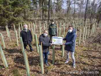 5000 Bäume in Straubenhardt gepflanzt - Region - Pforzheimer Zeitung