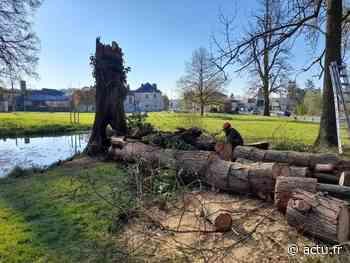 Liancourt : un cyprès centenaire incendié dans le parc floral, la mairie porte plainte - actu.fr