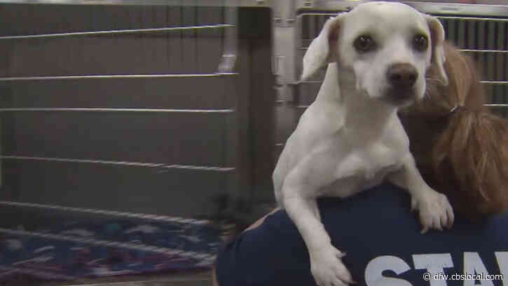 Fewer North Texans Opening Homes To New Pets With Schools And Businesses Back Open